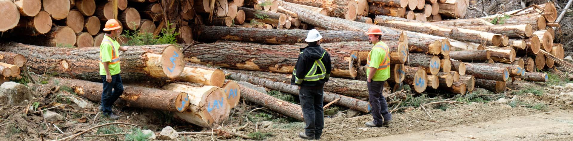Banner-3-employees-log-pile