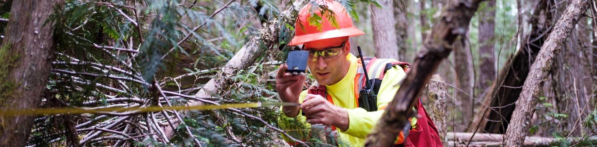 Banner Forest Measuring